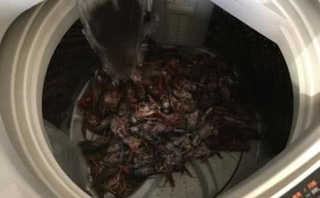 Chồng hí hửng mua 10 kg tôm hùm, vợ đảm giúp chồng rửa tôm bằng máy giặt và cái kết cay đắng khiến chồng khóc không dám khóc, giận không dám giận