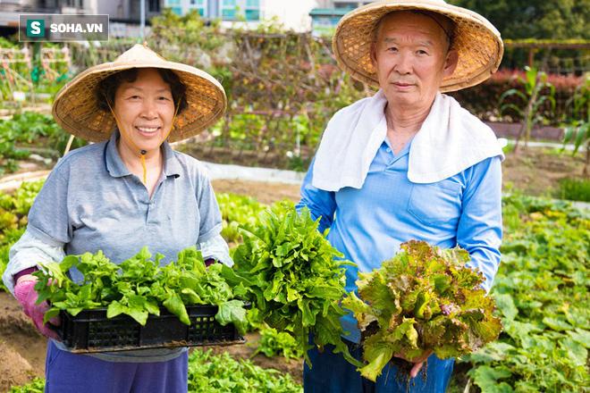 Ngôi làng sống thọ ở Nhật Bản: Ăn 4 loại thực phẩm mỗi ngày giúp đẩy lùi lão hóa, bệnh tật - Ảnh 2.