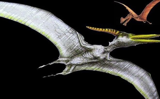 Phát hiện kinh ngạc về sự tiến hóa ở các loài cổ sinh vật biết bay