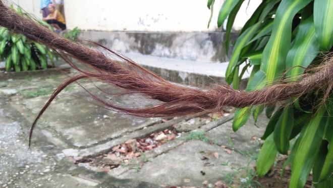 Cụ bà 94 tuổi với bộ tóc dài gần 4m ở Nghệ An tiết lộ lý do chưa gội đầu trong 65 năm qua  - Ảnh 4.