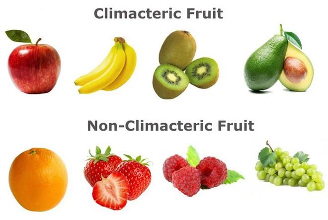 Tại sao trái cây chín? Điều gì xảy ra khi quả chín? - Ảnh 4.
