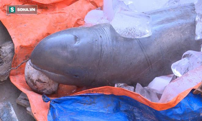 Ngư dân đòi 40 triệu mới chịu giao xác cá heo nước ngọt có nguy cơ tuyệt chủng - Ảnh 4.