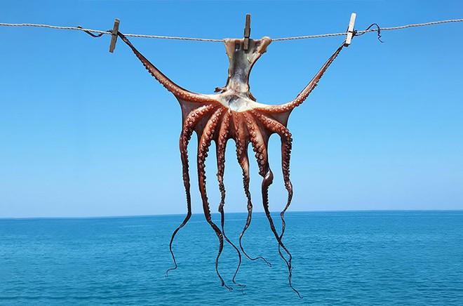 Đây là sinh vật duy nhất loài người không nên chăn nuôi nhưng lý do đằng sau mới thật sự bất ngờ - Ảnh 3.