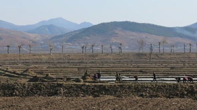 Cảnh dân Triều Tiên vật vã chống hạn trên đồng, xin viện trợ khẩn - Ảnh 2.