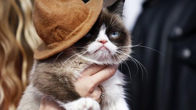 Grumpy Cat - cô mèo cáu kỉnh nhất thế giới với hơn 8 triệu người theo dõi đã qua đời - Ảnh 3.