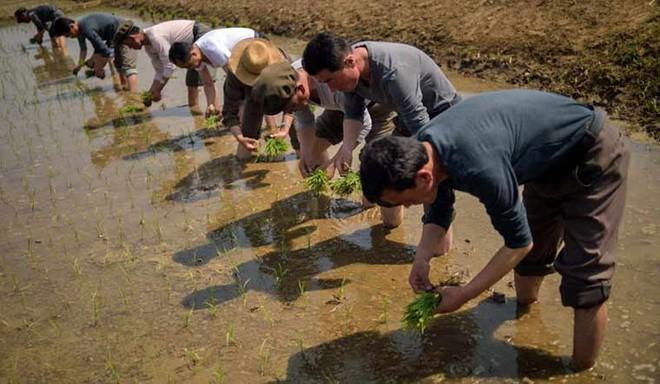 Cảnh dân Triều Tiên vật vã chống hạn trên đồng, xin viện trợ khẩn - Ảnh 6.