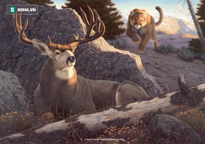 Báo sư tử phi thân và hạ gục hươu la đực chỉ trong chớp mắt - Ảnh 1.