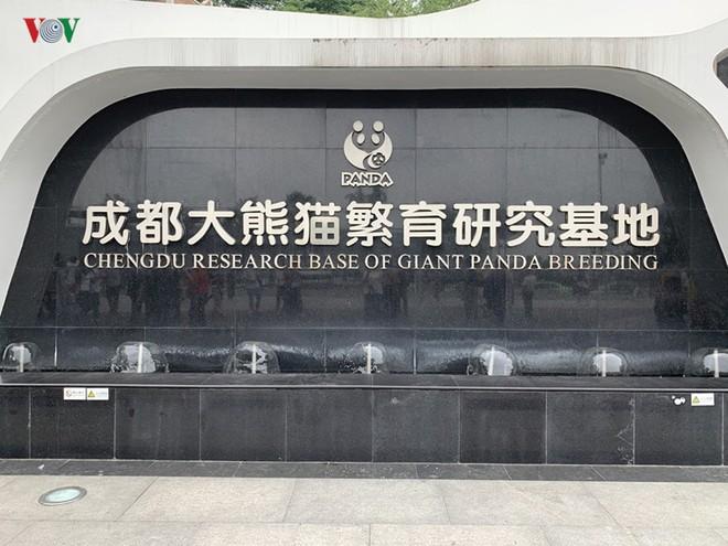 """Những hình ảnh thú vị về gấu trúc - """"quốc bảo"""" của Trung Quốc - Ảnh 1."""