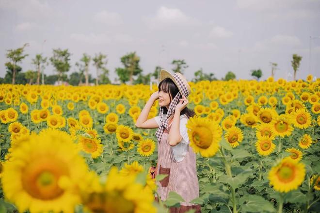 Hốt hoảng trước cảnh tượng hoang tàn của vườn hướng dương hot nhất Sài Gòn: Hoa héo úa, rác ngập tràn khắp nơi! - Ảnh 3.