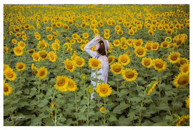 Hốt hoảng trước cảnh tượng hoang tàn của vườn hướng dương hot nhất Sài Gòn: Hoa héo úa, rác ngập tràn khắp nơi! - Ảnh 4.