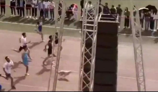MXH Trung Quốc xôn xao vì một chú chó: Đòi chụp kỷ yếu, chạy thi cùng sinh viên - Ảnh 1.