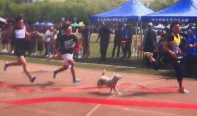MXH Trung Quốc xôn xao vì một chú chó: Đòi chụp kỷ yếu, chạy thi cùng sinh viên - Ảnh 2.