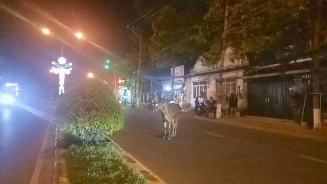Bò 'điên' gây náo loạn đường phố, húc 6 người bị thương - Ảnh 1.