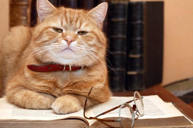 Người nuôi mèo thông minh hơn, nhưng người nuôi chó lại dễ tồn tại trong xã hội và đây là lý do - Ảnh 6.