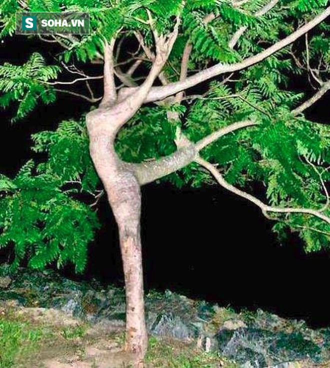 Tưởng không liên quan, nhưng hình dáng thân cây kỳ dị bạn chọn bộc lộ sự thật về chính bạn - Ảnh 3.