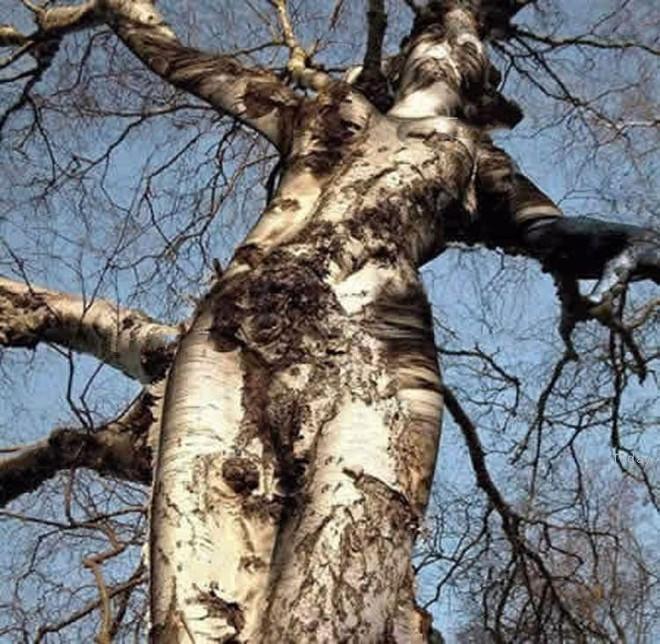Tưởng không liên quan, nhưng hình dáng thân cây kỳ dị bạn chọn bộc lộ sự thật về chính bạn - Ảnh 2.