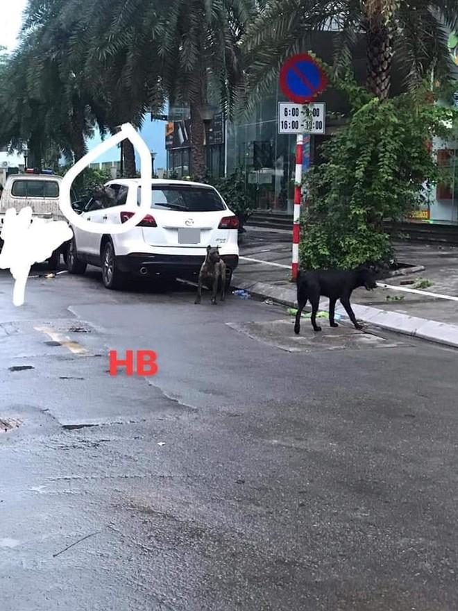 Phong tỏa cả tuyến phố ở Hà Nội để bắt 3 con chó lao ra từ xe Mazda - Ảnh 1.