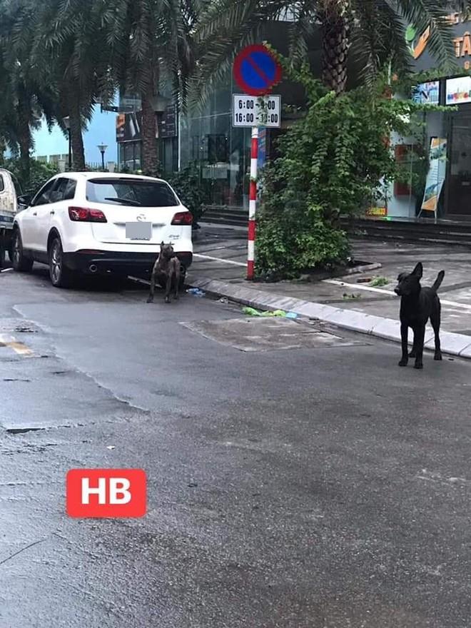 Phong tỏa cả tuyến phố ở Hà Nội để bắt 3 con chó lao ra từ xe Mazda - Ảnh 2.