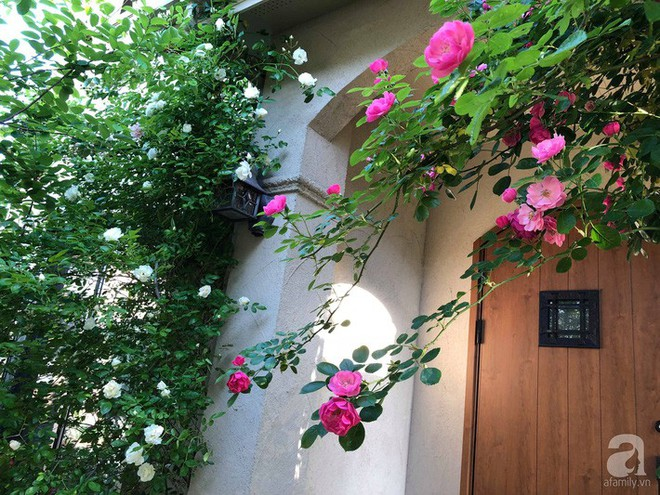 Khu vườn hoa hồng trước nhà đẹp như cổ tích của người đàn ông Việt ở Nhật - Ảnh 1.