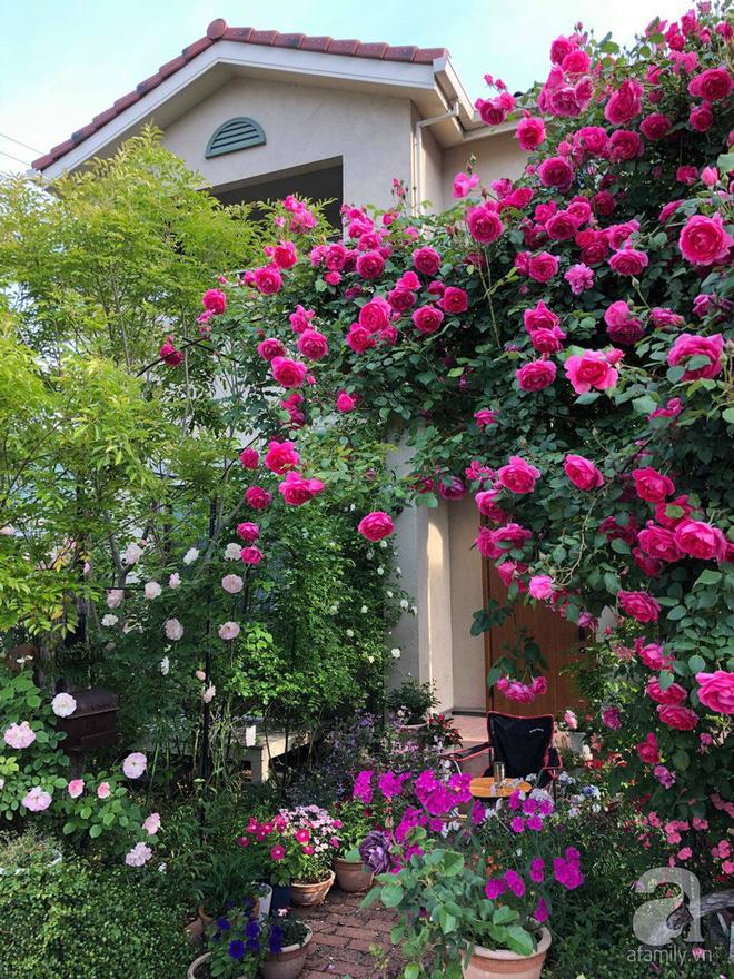Khu vườn hoa hồng trước nhà đẹp như cổ tích của người đàn ông Việt ở Nhật - Ảnh 2.