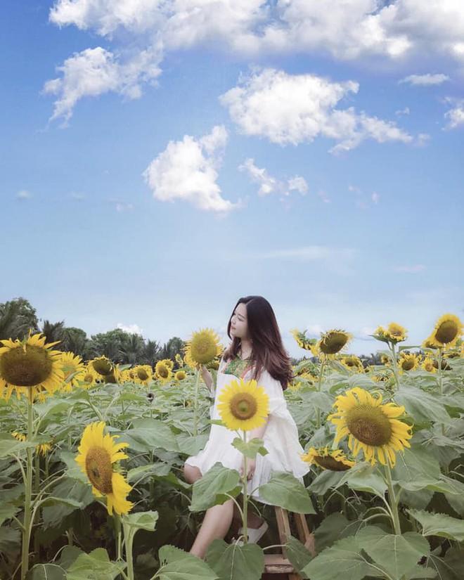 """Lướt mỏi tay loạt ảnh check-in """"thật là vàng tươi"""" của giới trẻ ở vườn hoa hướng dương mới xuất hiện ngay gần Hà Nội, không đi nhanh kẻo phí cả mùa hè - Ảnh 15."""