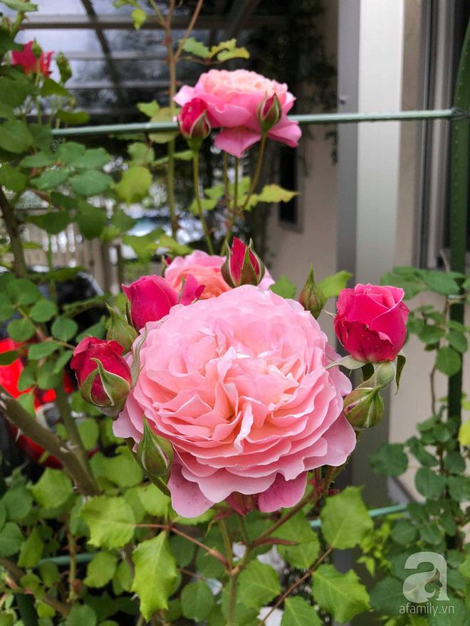 Khu vườn hoa hồng trước nhà đẹp như cổ tích của người đàn ông Việt ở Nhật - Ảnh 15.