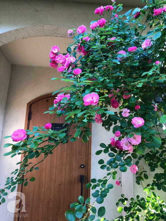 Khu vườn hoa hồng trước nhà đẹp như cổ tích của người đàn ông Việt ở Nhật - Ảnh 19.