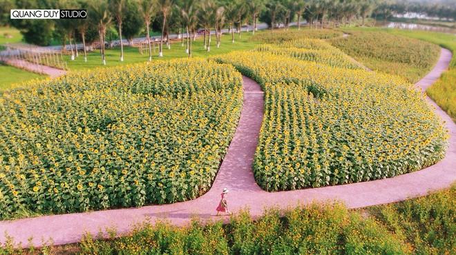 """Lướt mỏi tay loạt ảnh check-in """"thật là vàng tươi"""" của giới trẻ ở vườn hoa hướng dương mới xuất hiện ngay gần Hà Nội, không đi nhanh kẻo phí cả mùa hè - Ảnh 3."""