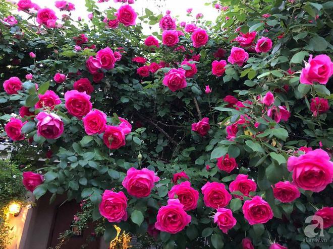 Khu vườn hoa hồng trước nhà đẹp như cổ tích của người đàn ông Việt ở Nhật - Ảnh 8.