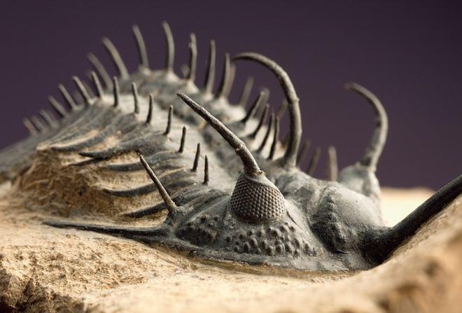 Đại hủy diệt khủng khiếp nhất lịch sử Trái Đất: Khoa học không thể lý giải nổi nguyên nhân - Ảnh 4.