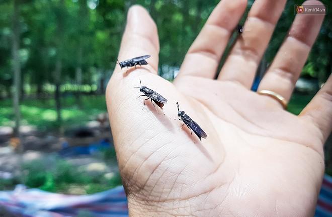 Chàng kỹ sư Sài Gòn bỏ việc về quê nuôi ruồi, doanh thu 80 triệu đồng/tháng: Từng bị gia đình phản đối, bạn bè cười nhạo - Ảnh 11.