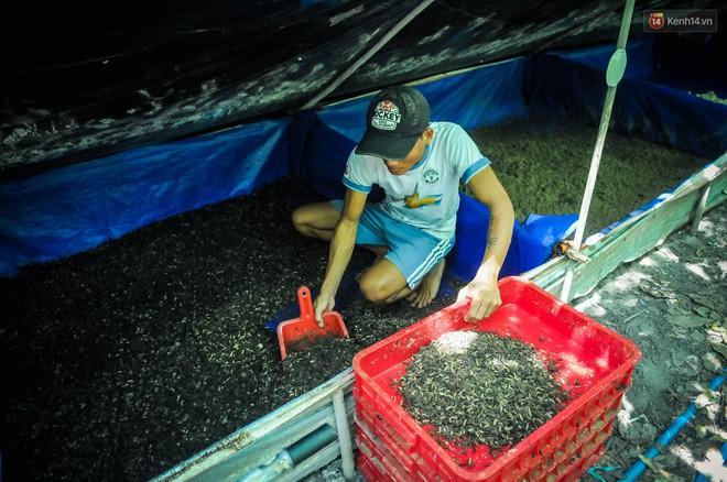 Chàng kỹ sư Sài Gòn bỏ việc về quê nuôi ruồi, doanh thu 80 triệu đồng/tháng: Từng bị gia đình phản đối, bạn bè cười nhạo - Ảnh 8.