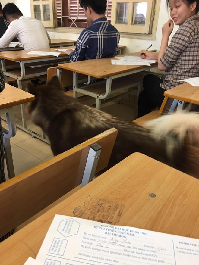 Xuất hiện bất ngờ trong lớp trong giờ kiểm tra, chú chó khiến sinh viên hết hồn vì tưởng trường cử giám thị kiểu mới - Ảnh 2.