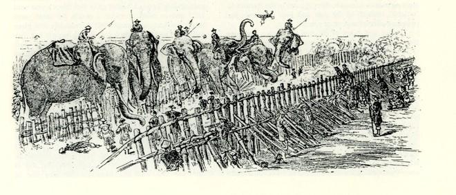 Cách tuyển voi oai hùng trong sử Việt: 500 lính múa đao xông tới, voi Chúa Nguyễn vẫn đứng yên - Ảnh 1.