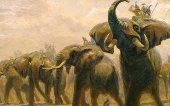 Cách tuyển voi oai hùng trong sử Việt: '500 lính múa đao xông tới, voi Chúa Nguyễn vẫn đứng yên'
