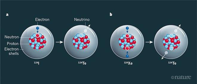 Máy dò vật chất tối quan sát được sự phân rã hạt nhân ngoại lai - Ảnh 3.