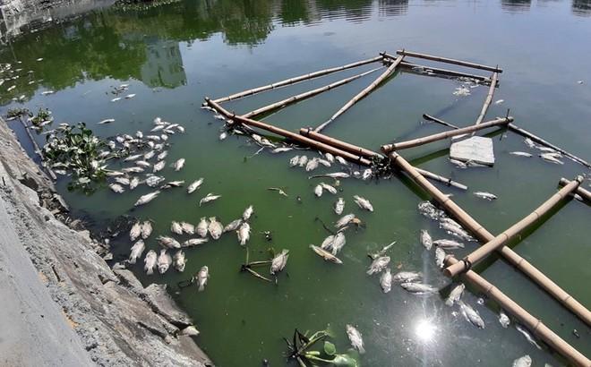 Cá nổi lềnh bềnh trong hồ mà ông Dũng 'lò vôi' định cải tạo