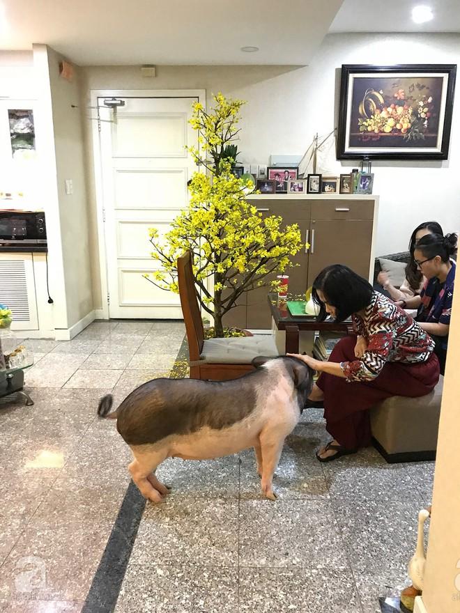 Gia đình ở Sài Gòn nuôi chú heo nặng gần 60kg, thực đơn riêng có tôm càng, xúc xích Đức, tổ yến - Ảnh 17.