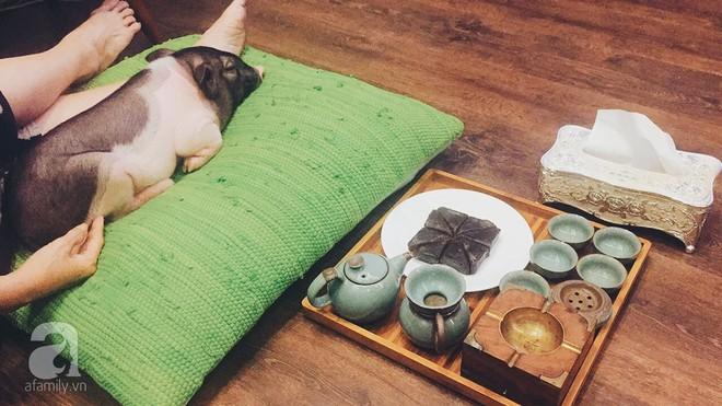 Gia đình ở Sài Gòn nuôi chú heo nặng gần 60kg, thực đơn riêng có tôm càng, xúc xích Đức, tổ yến - Ảnh 4.