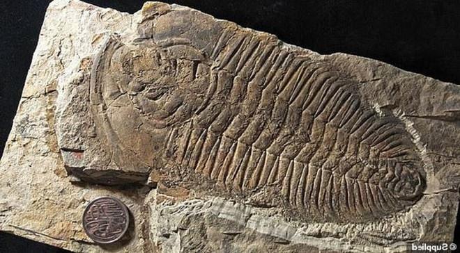 Phát hiện loài bọ bạo chúa có kích thước khổng lồ cách đây 500 triệu năm - Ảnh 1.