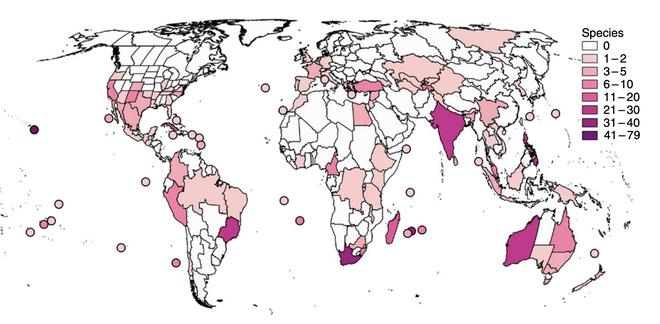 Cây cối sẽ tuyệt chủng ít hơn hiện giờ đến 500 lần nếu loài người không tồn tại - Ảnh 4.