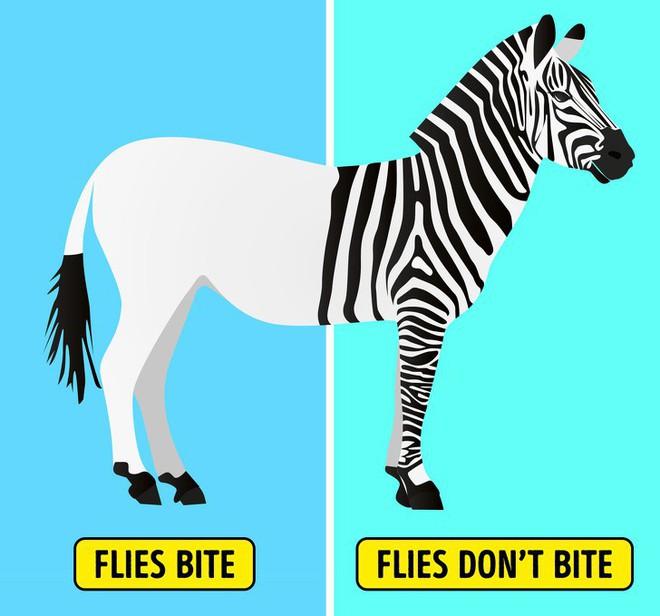 8 loài vật có ngoại hình tưởng sai trái nhưng thực ra lại là cục vàng trong làng tiến hóa - Ảnh 4.