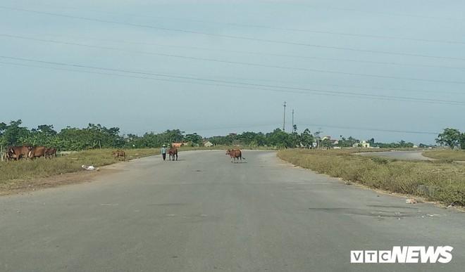 Cận cảnh dự án đường nghìn tỷ đồng dang dở, bỏ hoang, trở thành nơi chăn bò ở Nghệ An - Ảnh 1.