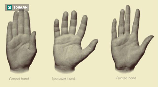 Luận giải tính cách qua từng ngón tay và bàn tay: Người tay to thường cầu toàn - Ảnh 1.