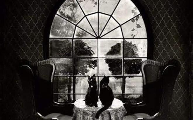 Hình ảnh bạn nhìn thấy đầu tiên trong bức tranh đen trắng tiết lộ bạn là người bình tĩnh hay yếu đuối