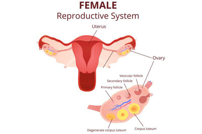 Bị đau bụng sau khi yêu: 6 nguyên nhân cả nam và nữ đều nên biết để tránh gặp nguy hiểm - Ảnh 4.