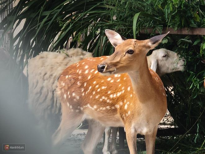 Hóa ra tác dụng thú vị nhất của camera zoom 10x là đi chụp động vật - Ảnh 7.