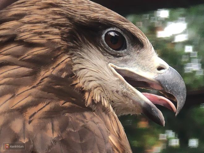 Hóa ra tác dụng thú vị nhất của camera zoom 10x là đi chụp động vật - Ảnh 10.