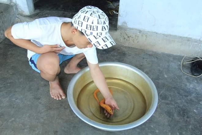 Bắt được lươn vàng óng ánh, người đàn ông không bán dù được trả giá cao - Ảnh 1.