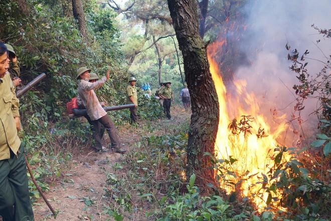 Người phụ nữ bị chết cháy trong quá trình dập lửa cứu rừng - Ảnh 1.
